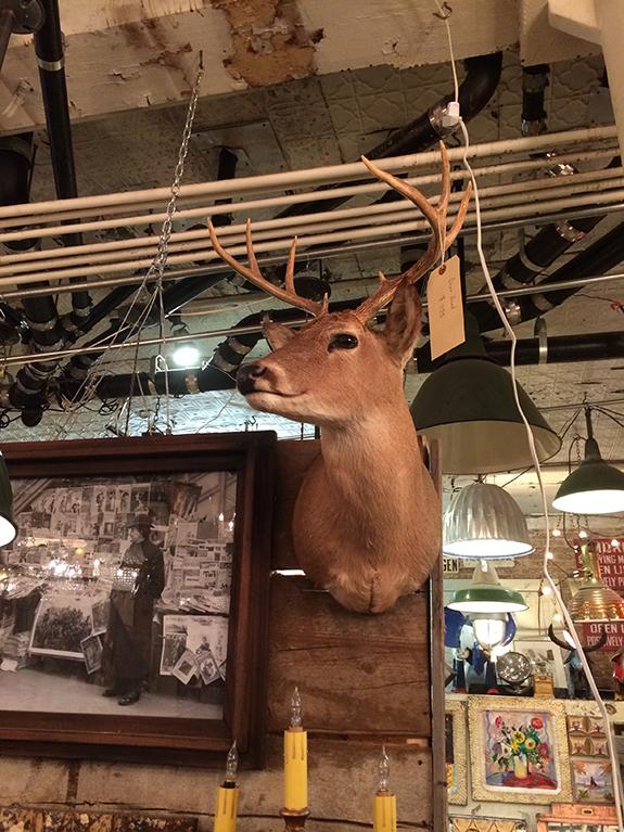 Why hello my deer...
